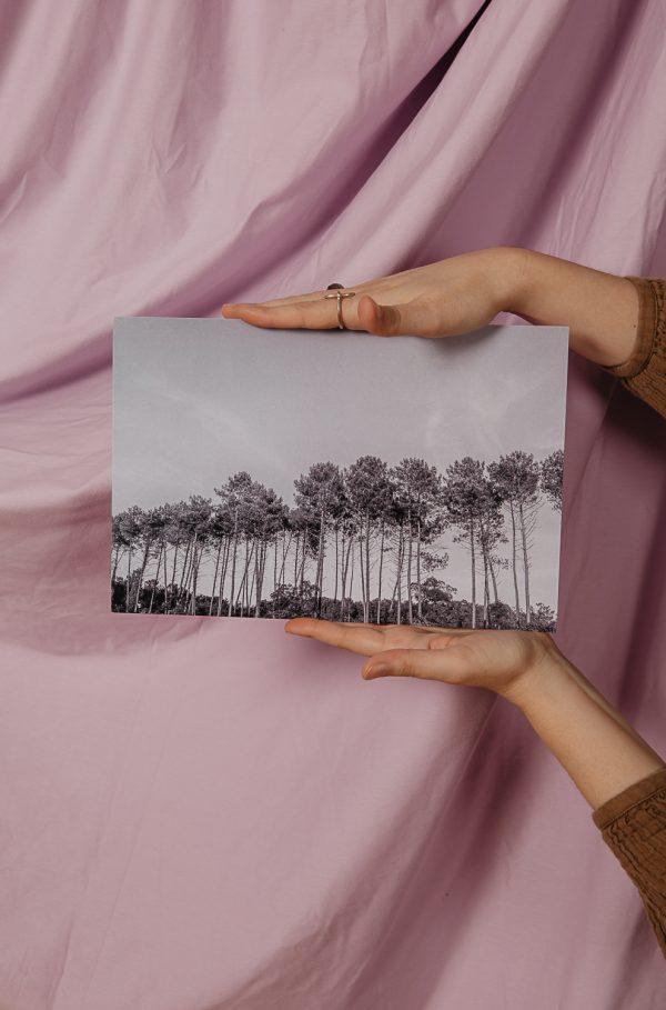 les pins des landes
